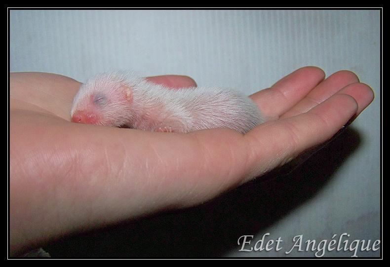 les bébé de loonie sont nés! 100_1408