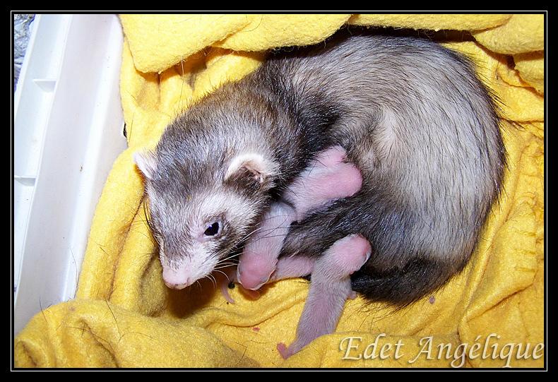 les bébé de loonie sont nés! 100_1429