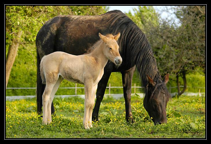 les chevaux de ma soeur a l'ordi _DSC4133