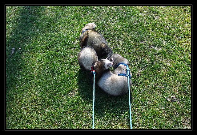 sortie fufus chiens DSCF7245
